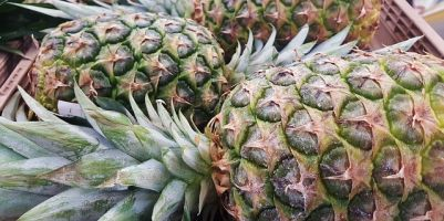 Skladování ananasu